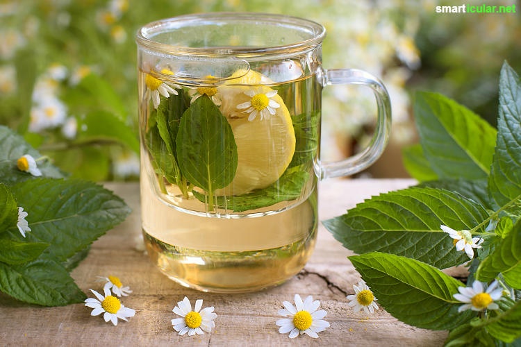 Für fast jedes Wehwehchen findet sich ein heilsamer Tee, der dir ganz ohne Tabletten Linderung verschaffen kann und zu mehr Wohlbefinden verhilft.