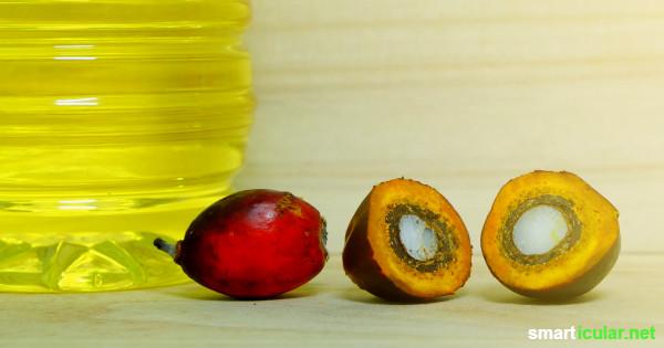 Palmöl ist in vielen Lebensmitteln und Kosmetik enthalten, ohne dass wir es wahrnehmen. Diese Tipps helfen, deinen Palmölkonsum deutlich zu reduzieren.