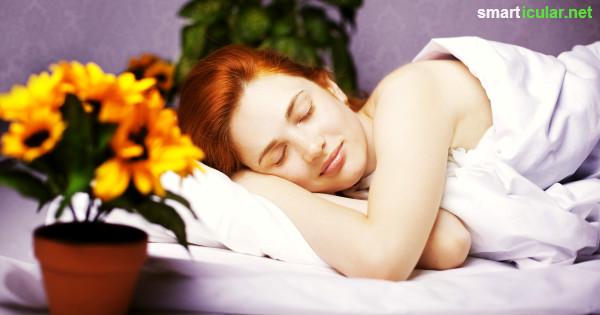 zimmerpflanzen als nat rliche einschlafhilfe und f r. Black Bedroom Furniture Sets. Home Design Ideas