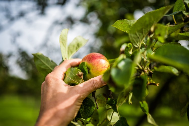 Es gibt News in der Landwirtschaft: Permagold will Permakultur für alle an den Markt bringen.