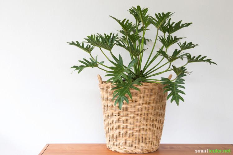 Zimmerpflanzen als natürliche Einschlafhilfe und für ...