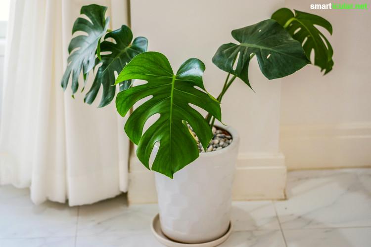Mit Den Richtigen Pflanzen Im Schlafzimmer Sorgst Du Für Gute Luft Und  Erholsamen Schlaf   Viel