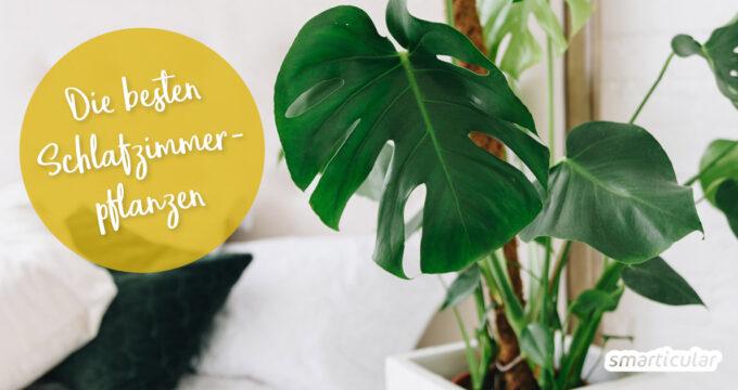 Mit den richtigen Pflanzen im Schlafzimmer sorgst du für gute Luft und erholsamen Schlaf - viel wirksamer und gesünder als Tabletten.