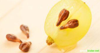 Aus den meisten Trauben im Supermarktregal sind sie verschwunden: Traubenkerne! Dabei enthalten die unscheinbaren Samen jede Menge gesunde Inhaltsstoffe, die du dir nicht entgehen lassen solltest.