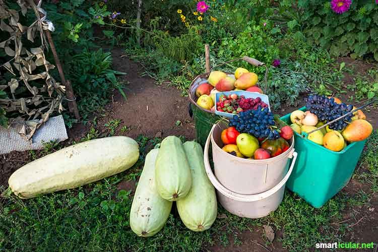 Immer nur fades Einheitsgemüse im Supermarkt? Dabei gibt es viele gute Gründe, alte Gemüsesorten wieder vermehrt anzubauen und zu nutzen!