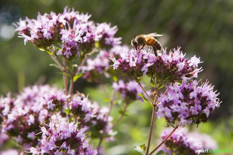 Einen Straßenbaum mit Blumen zu unterpflanzen, bietet nicht nur einen schönen Anblick, sondern auch Nahrung für Bienen und andere nützliche Insekten.