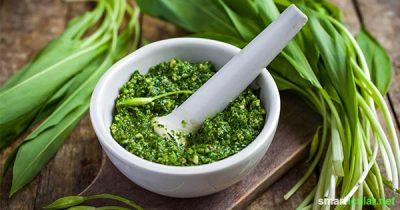 Der aromatische Bärlauch lässt sich leicht lange haltbar machen. Mit diesem Rezept für veganes Bärlauchpesto startest du gesund in den Frühling.