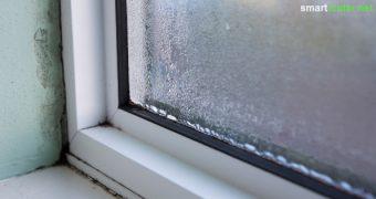 Mit diesen Tipps zum richtigen Lüften kannst du Schimmel an Wänden und Fenstern vorbeugen. Teure Luftentfeuchter sind nicht nötig.