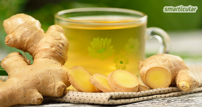 Ingwer ist eine der wirksamsten Heilpflanzen und kann bei einer ganzen Reihe von Beschwerden Linderung verschaffen. Wie du einen heilsamen Ingwertee zubereitest, erfährst du hier.