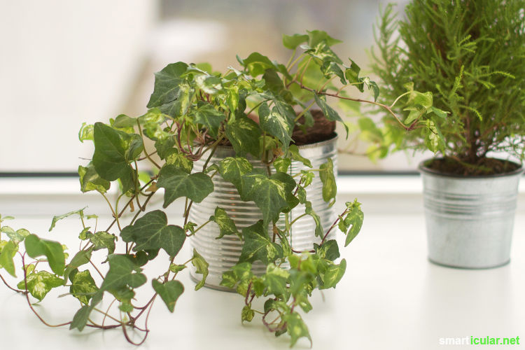 Wenn du auch zu den Menschen gehörst, bei denen Zimmerpflanzen schnell das Zeitliche segnen, dann sind diese robusten Pflanzen genau das richtige für dich.