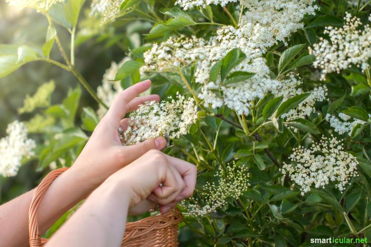 8 pflanzen f r den garten mit essbaren schmackhaften bl ten. Black Bedroom Furniture Sets. Home Design Ideas