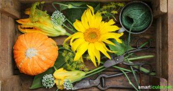 Zier- oder Nutzgarten? Mit Blühpflanzen, die schön aussehen und außerdem essbar sind, kannst du beides haben!