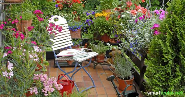 Um Bienen und Nützlingen mit wenig Aufwand zu helfen, kannst du deinen Garten oder Balkon mit diesen Tipps natürlicher gestalten und pflegen.