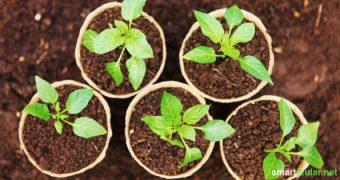 Selbst angebautes Gemüse ist nicht nur lecker, sondern du weißt auch genau, was drin steckt! So gelingt die Anzucht zu Hause mit einfachen Mitteln.