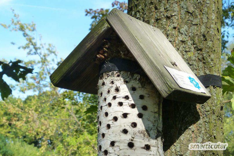 Um nützlichen Insekten eine Nisthilfe zu bieten, musst du kein fertiges Insektenhotel kaufen. Du kannst es ganz einfach selber bauen!