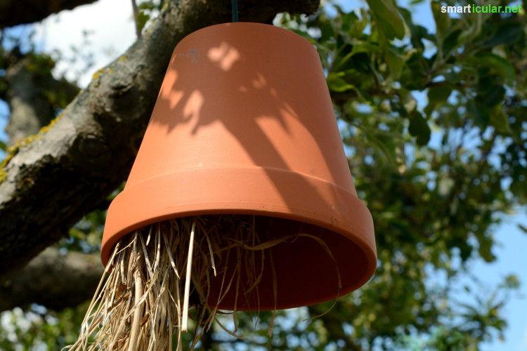 Ein Insektenhotel Selber Bauen Anleitung Und Tipps Was Zu Beachten Ist