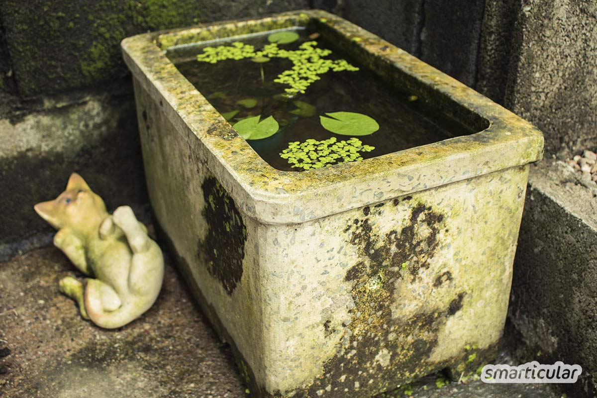 Einen Garten naturnah zu gestalten ist nicht nur bienenfreundlich und ökologisch, sondern auch besonders pflegeleicht und schön.