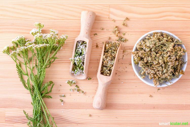 Wildkräuter sind fast überall kostenlos verfügbar, dabei vitalstoffreicher als manches Gemüse. Wie du sie in der Küche und für deine Gesundheit nutzen kannst, erfährst du hier!
