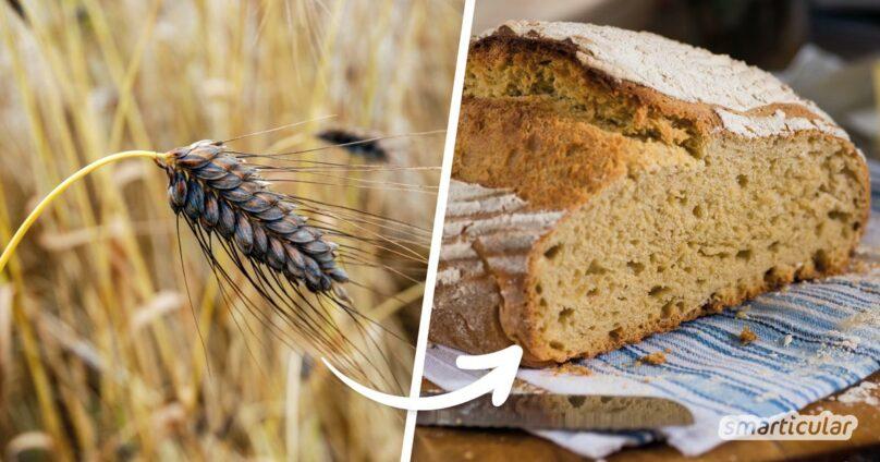 Mehl aus Emmer, Einkorn und anderen alten Getreidesorten ist viel gesünder als helles Weizenmehl. Hier findest du unsere besten Rezepte, um das Urgetreide zu verarbeiten.