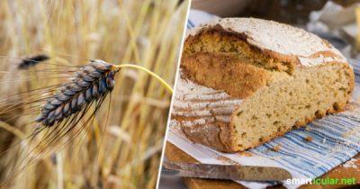 Wo heute Weizen drin ist, war früher Emmer, Einkorn oder Ur-Roggen enthalten. Mit diesen Rezepten entdeckst du die wertvollen alten Getreidesorten neu!