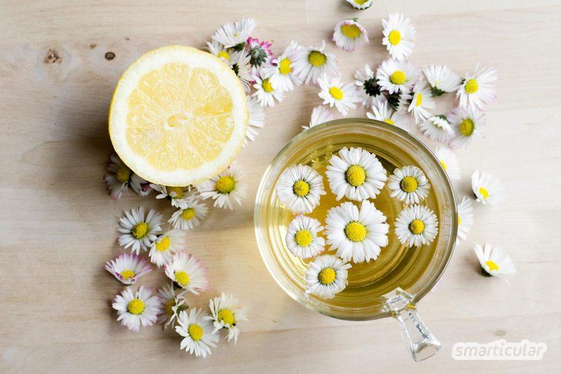 Das Gänseblümchen ist die Heilpflanze des Jahres 2017 - ihre Heilkräfte kannst du dir leicht mit selbst gemachten Pflegeprodukten zunutze machen.