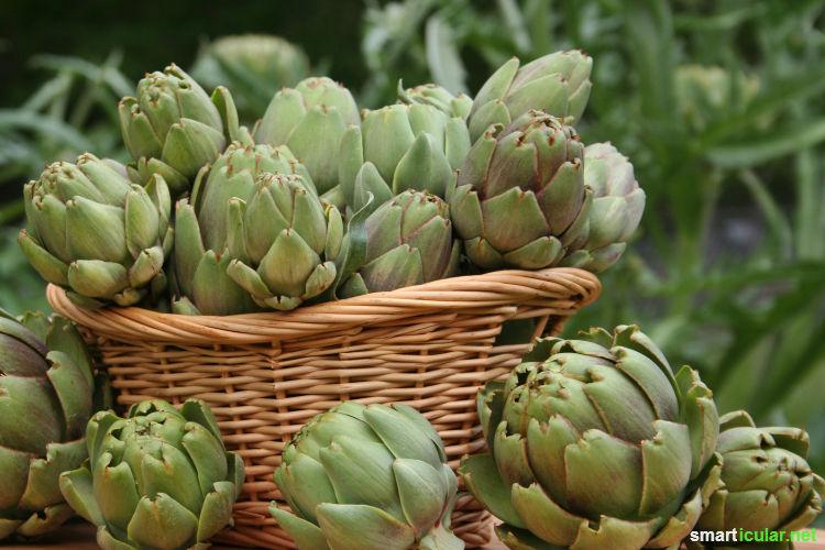 Einmal säen, immer wieder ernten: diese mehrjährigen Gemüsesorten, Kräuter und Früchte ermöglichen eine reiche Ernte ohne großen Arbeitsaufwand.