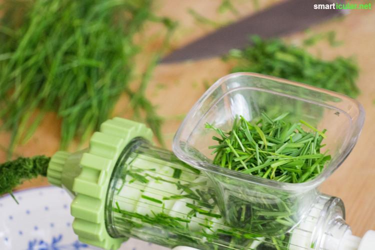Weizengras wird als Superfood immer populärer. Wie du das vitalstoffreiche Grün in der Wohnung preiswert selbst anbauen und zubereiten kannst, erfährst du hier.