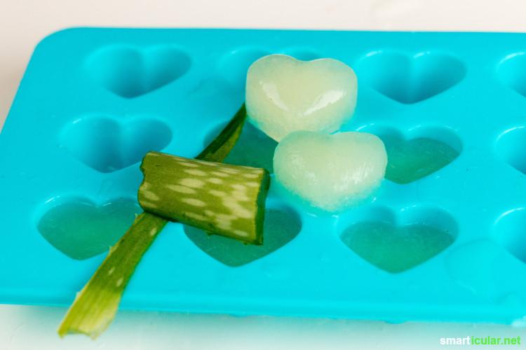 aloe vera eisw rfel aus dem gel der pflanze selber machen. Black Bedroom Furniture Sets. Home Design Ideas