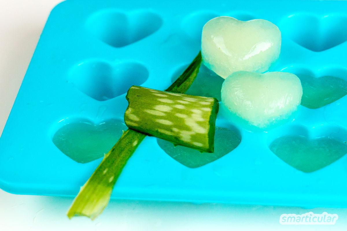 Wenn Insektenstiche und Sonnenbrand der Haut zusetzen, hilft Aloe vera. In Form von Erste-Hilfe-Eiswürfeln kühlt das Gel zusätzlich angenehm.