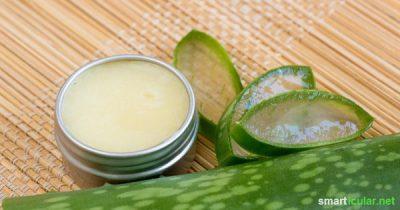Aloe vera ist für ihre feuchtigkeitsspendenden und hautpflegenden Eigenschaften bekannt. Mit Aloe-vera-Gel und nur wenigen weiteren Zutaten kannst du eine natürliche Lippenpflege selber machen.
