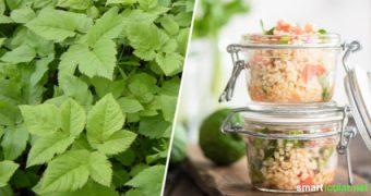Frühlingszeit ist Wildkräuterzeit! Wie du mit dem leckeren und gesunden Giersch zahlreiche Gerichte zubereiten kannst, erfährst du hier.