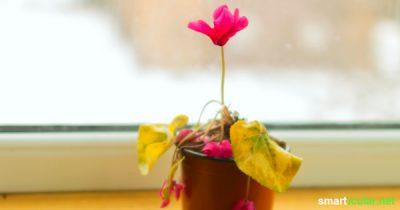 Auch Pflanzen kränkeln leider ab und zu - woran du die häufigsten Pflegefehler erkennst und wie du sie beheben kannst, erfährst du in diesem Beitrag.