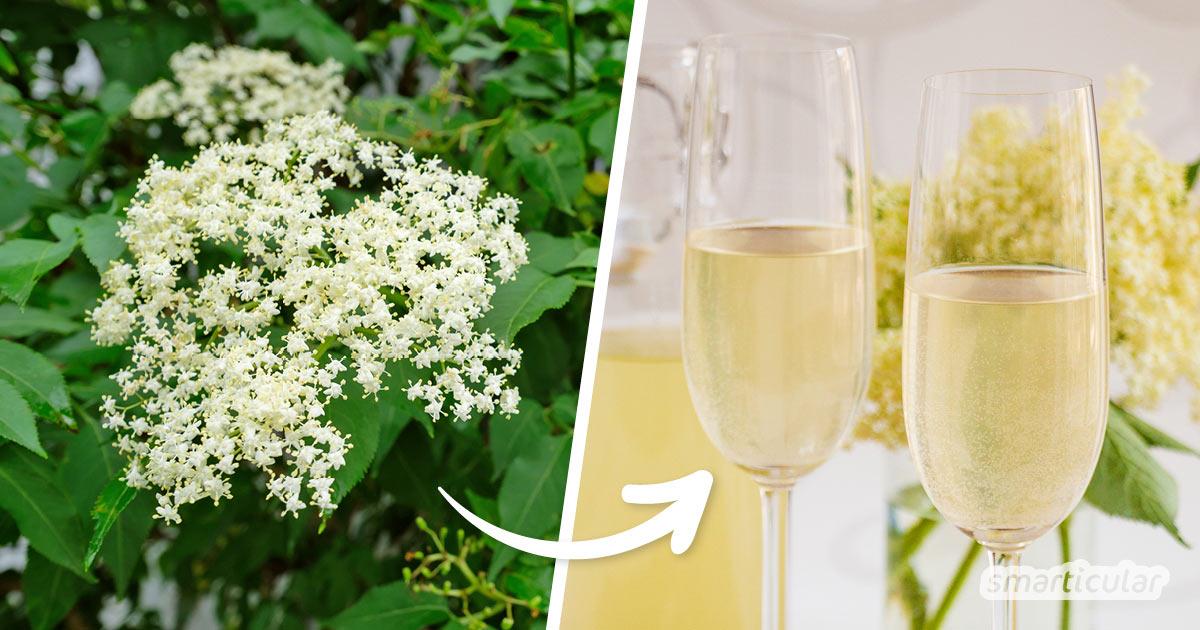 Holunderblüten mit ihrem intensiv-süßlichen Aroma sind eine beliebte Zugabe in Getränken und Süßspeisen. Probiere doch mal dieses köstliche Rezept für Holunderblütensekt aus!