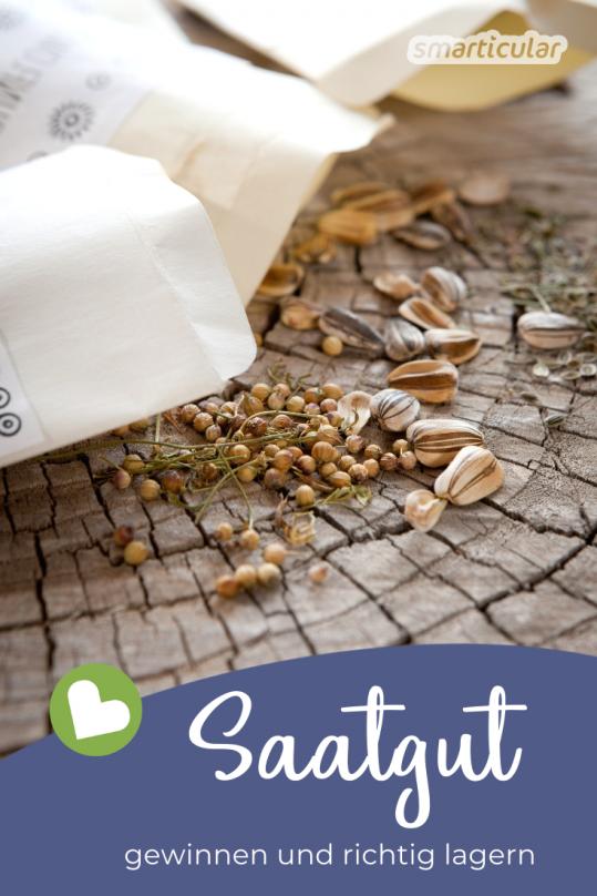 Statt jedes Jahr neues Saatgut zu kaufen, kannst du von vielen Blumen- und Gemüsesorten die Samen ganz einfach ernten, lagern und im Frühjahr wieder aussäen. Mit diesen Tipps gelingt's!