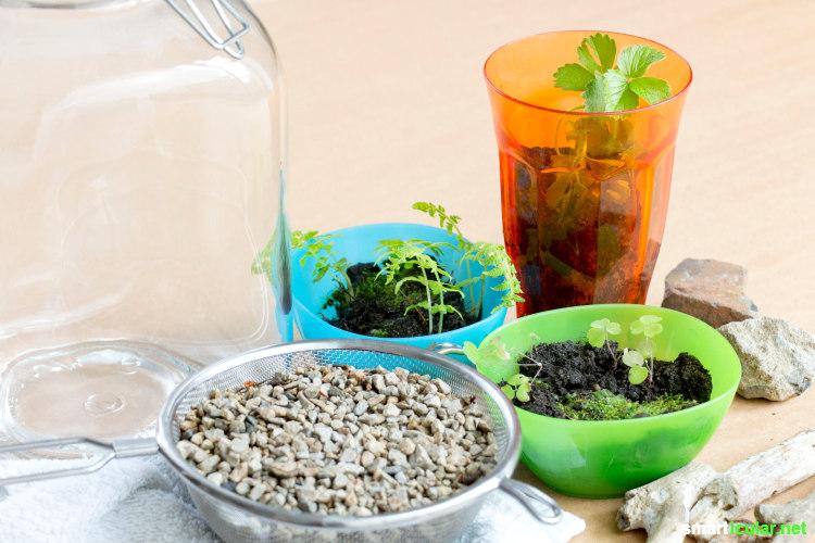 Minigarten Im Glas geschlossenes Ökosystem - ewigen minigarten im glas anlegen
