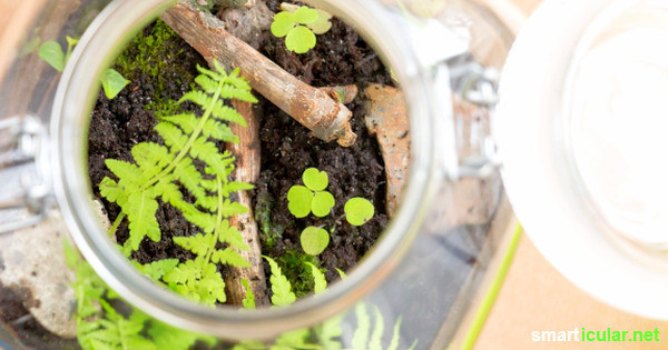 Ein Flaschengarten ist ein in sich geschlossenes System, das oft jahrelang keine Pflege braucht. Du kannst das kleine Biotop mit heimischen Pflanzen selbst anlegen.