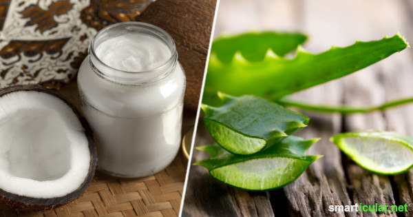 Trockene Haut Vorbeugen Und Pflegen Mit Aloe Vera Und Kokosöl