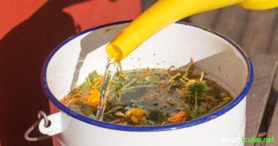 Warum teure Dünger, Unkrautvernichter und Insektizide kaufen, wenn du stattdessen natürlichem kostenlose Ringelblumen-Jauche selber machen kannst!