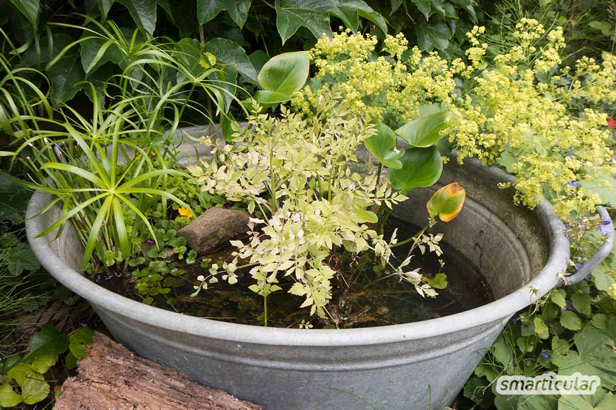 Ein Miniteich auf dem Balkon oder der Terrasse kann im Hochsommer lebenswichtig werden für Vögel, Bienen und andere Insekten. Schon eine flache Schale kann dafür ausreichen.