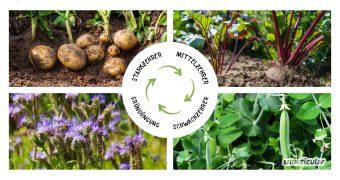 Mit der richtigen Fruchtfolge kannst du den Platz im Garten optimal nutzen, den Ernteertrag steigern und den Bedarf an zusätzlichem Dünger minimieren.