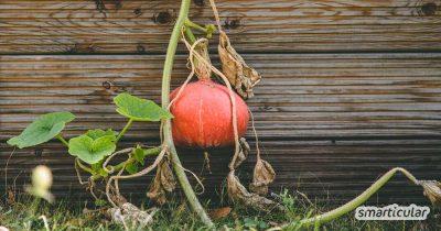 Mit der Natur statt gegen die Natur: Das Grundprinzip der Permakultur lässt sich leicht im eigenen Garten umsetzen. Auch kleine Schritte bringen dich dem eigenen Permakultur-Garten ein Stückchen näher.