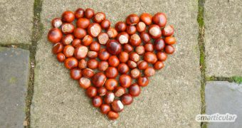 Kastanien begegnen uns im Herbst auf vielen Wegen. Lasse sie aber nicht einfach liegen! Nimm sie mit und nutze sie für deine Gesundheit und im Haushalt!