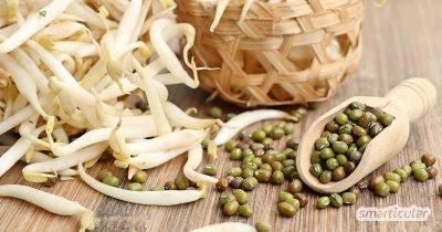 Um besonders kräftige und geschmacksintensive Mungbohnensprossen selbst zu ziehen, helfen diese Tipps. Gesunde Vitamine für den Winter!