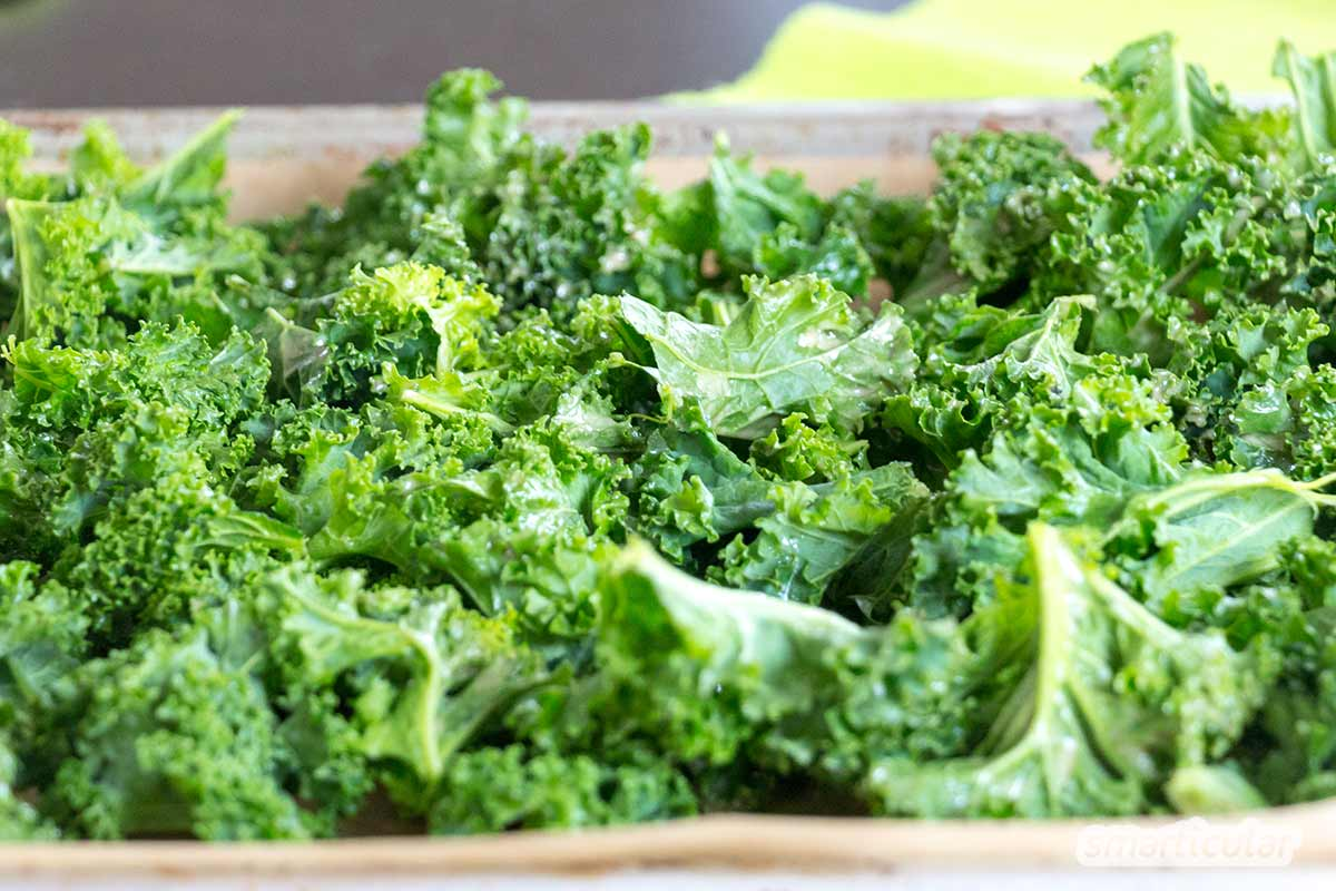 Im Winter gibt es nur wenig frisches Obst und Gemüse. Grünkohl gehört zu den wenigen Ausnahmen. Mit diesem Rezept genießt du ihn einmal etwas anders!