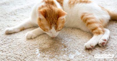 Übelriechender Katzenurin ist hartnäckig und unangenehm. Mit diesen Hausmitteln bekommst du das Problem preiswert und umweltfreundlich in den Griff.