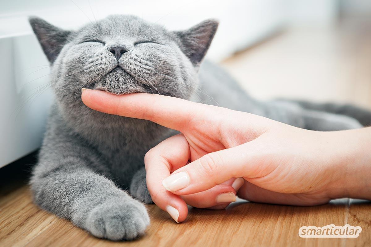 Katzenurin Entfernen Und Geruch Vermeiden Mit Hausmitteln