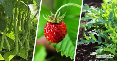 Im (Halb-)Schatten gedeihen mehr Gemüsesorten, als die meisten glauben. Mit ein paar einfachen Tipps kannst du dich auch in einem Schattengarten an einer reichen Ernte erfreuen.