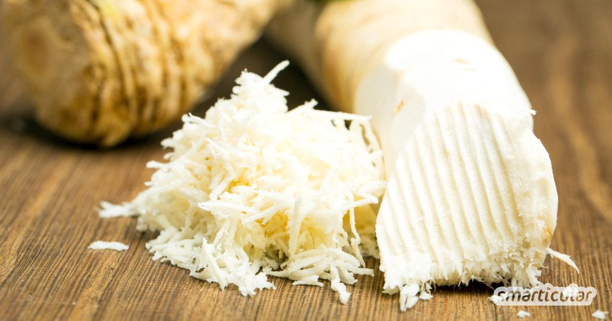 Meerrettich spielt in deiner Küche kaum eine Rolle – schade, denn die scharfe Knolle ist überaus gesund und lässt sich für viele Rezepte und die Hausapotheke verwenden.