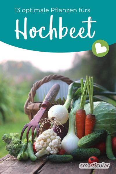 Um den begrenzten Platz im Hochbeet optimal zu nutzen, eignen sich manche Gemüsesorten, Kräuter und Früchte besonders gut. Hier findest du die besten Pflanzen fürs Hochbeet.