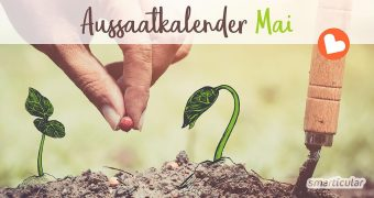 Im Mai startet das Gartenjahr voll durch! Zahlreiche Gemüse, Kräuter und Blumen können jetzt direkt ins Beet gesät.